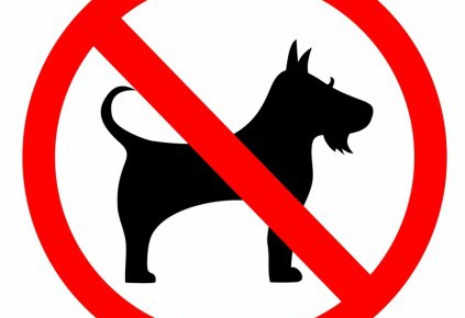 no_dog_sign_312049